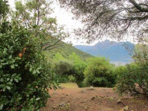 Stellfläche zur freien Auswahl auf Camping E Gradelle, Korsika / © Camping Korrespondent
