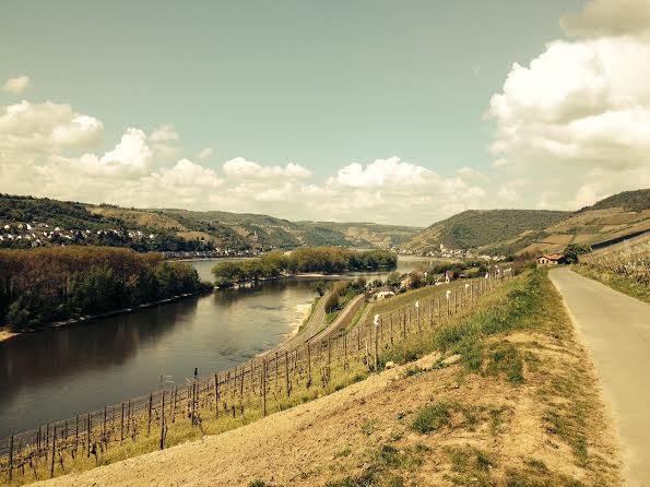 Blick aus Weinberg über den Rhein