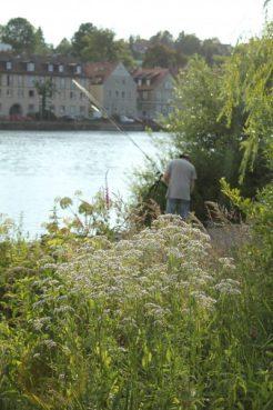 Angeln am Mainufer, Kitzingen