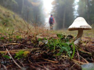 Vinschgauer Höhenweg / © Camping Korrespondent