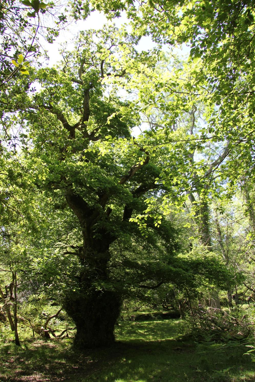 Baum, Aldridge Hill Campsite / © schön campen