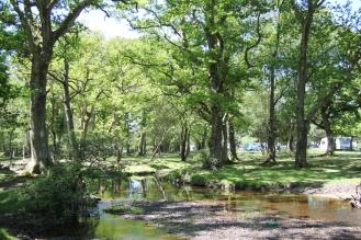 Wald, Aldridge Hill Campsite / © schön campen