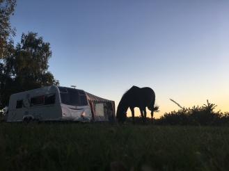 grasendes Pferd, Aldridge Hill Campsite / © schön campen